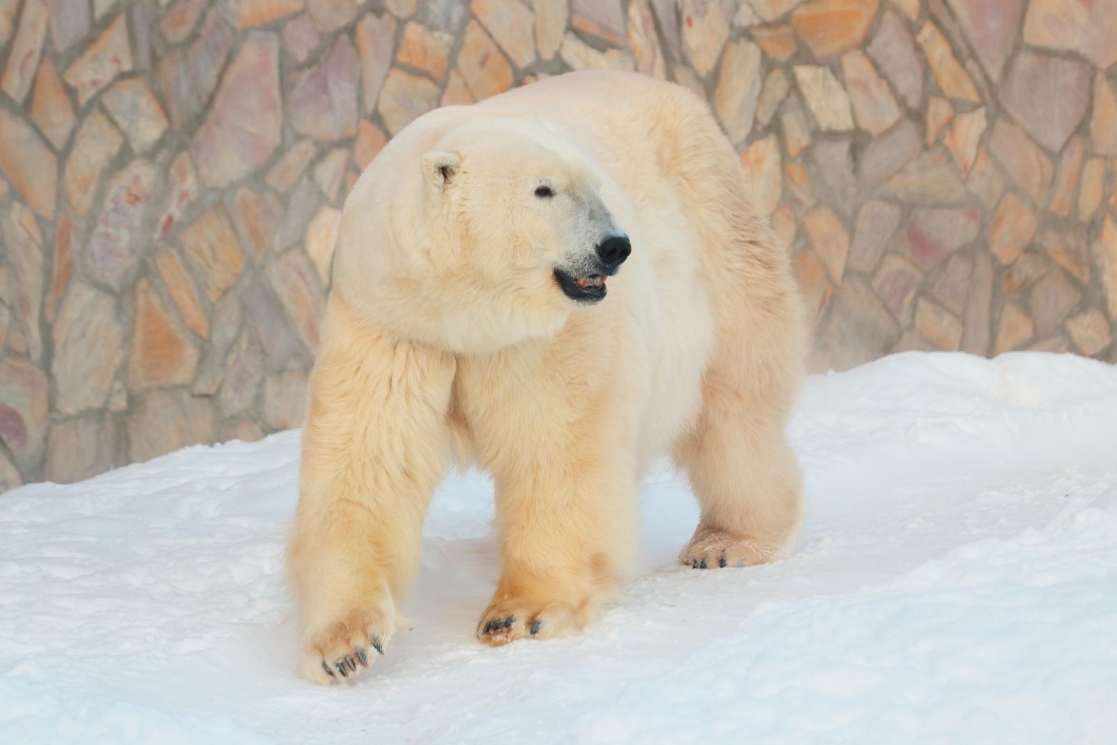 Картинки по запросу сотрудничество северных зоопарков